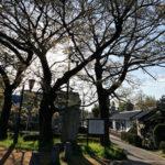 磯部の一本榎(富山市) 早百合伝説の場所