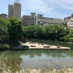 松川といたち川の合流点(富山市)