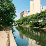 朝の松川(富山市)
